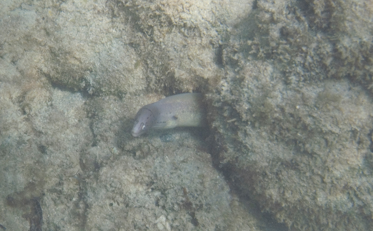 Moray, not sure what kind. Sort of looks like masked, but not quite.