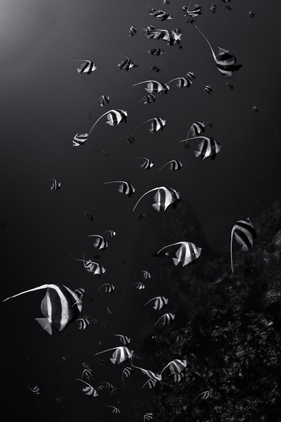 20100406_maldives_2994-Edit