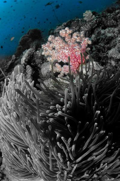 2011__Maldives__3293-Edit