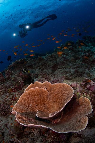 2011__Maldives__4448