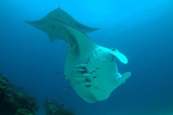 Underwater Diving Trips