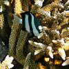 Maldivian Reef Fish