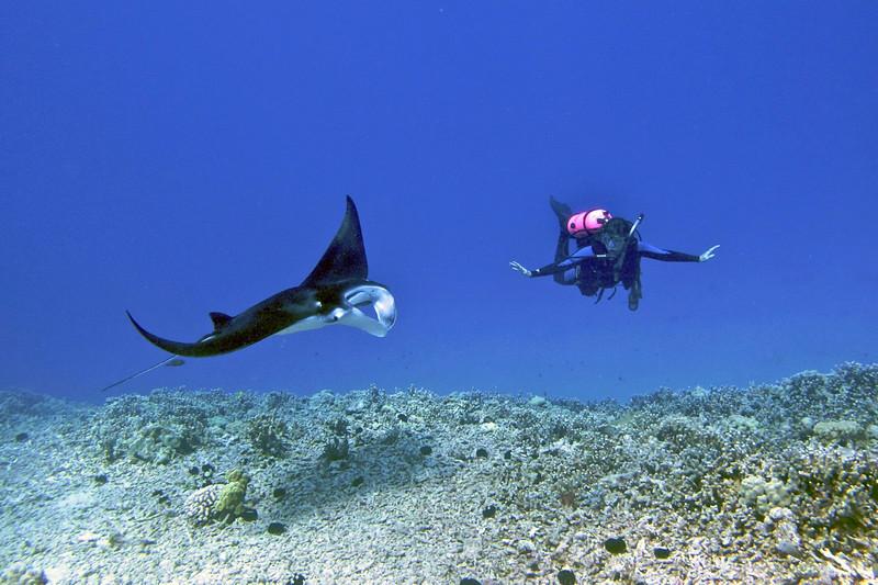 Nick and Isabelle , Manta Ray (Manta birostris), Kona Coast, Hawaii