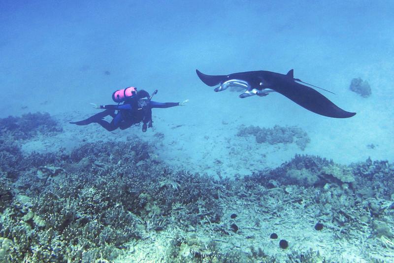 Isabelle and Nick, Manta Ray (Manta birostris), Kona Coast, Hawaii