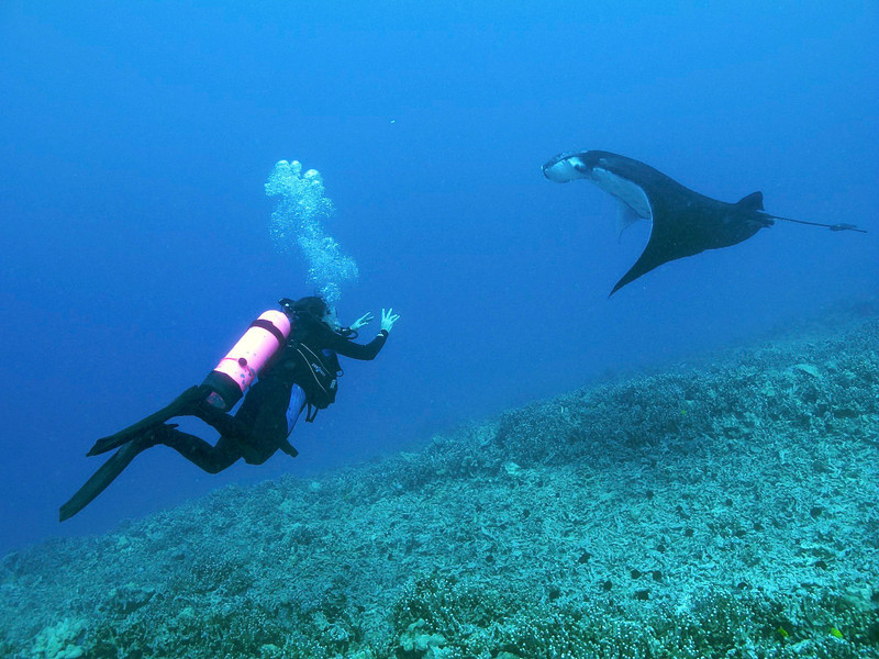 Kapono & Isabelle , Manta Ray (Manta birostris), Kona Coast, Hawaii
