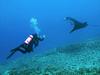 Kapono & Isabelle , Manta Ray (Manta birostris), Kona Coast, Hawaii