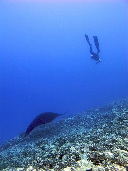 Kailey Ray and free diver, Manta Ray (Manta birostris), Kona Coast, Hawaii