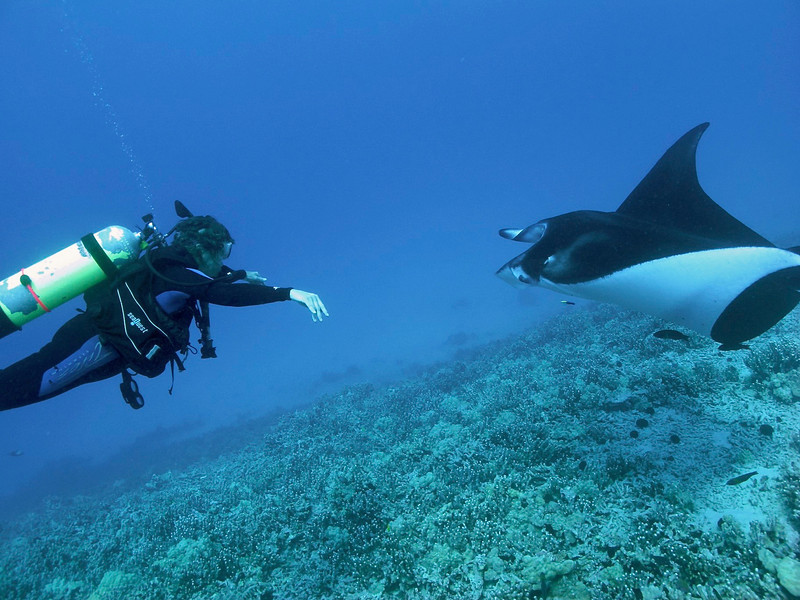 Melainah Ray & Isabelle , Manta Ray (Manta birostris), Kona Coast, Hawaii