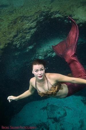 Mermaid Devon