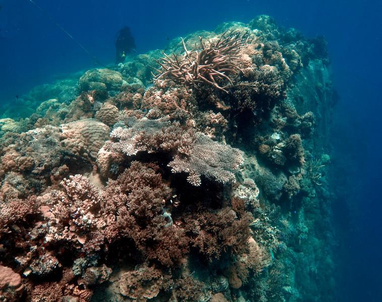 Hull of the Hoyo Maru (lying upside down)