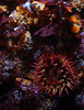 anemone and invertebrates
