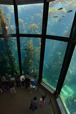 Monterey Bay Aquarium (June - 2016)