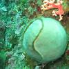 Tennis ball sponge