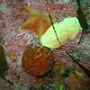 Bat Star, Sea Lemon, OJ Puffball sponge, OJ cup coral