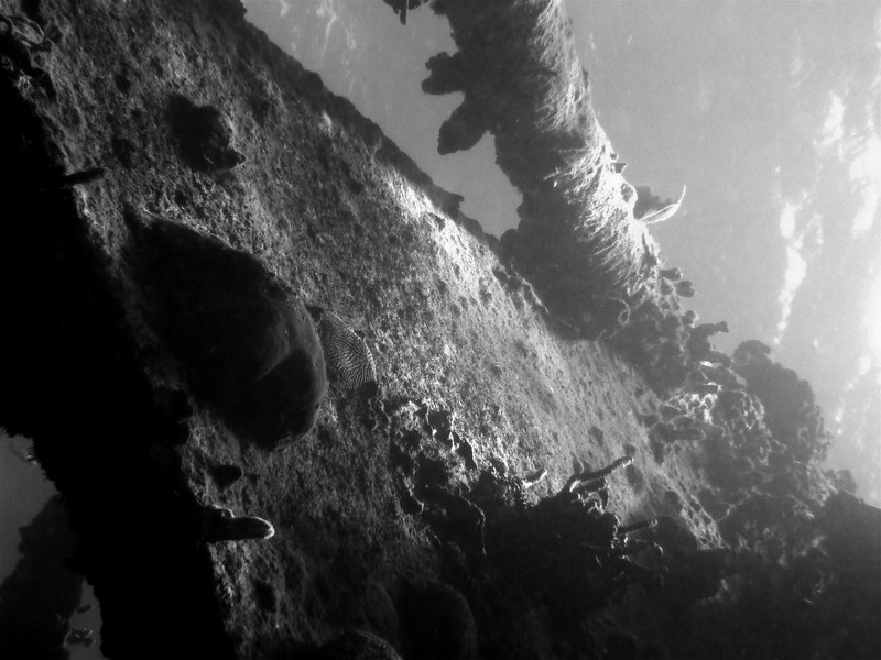 "Shipwreck: the Royal Mail Steamer a/k/a RMS Rhone. BVI. ""The Deep"" was filmed on this wreck."