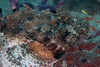 It's a Scorpion Fish, don't touch him!!!