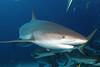 Underwater : 19 galleries with 564 photos