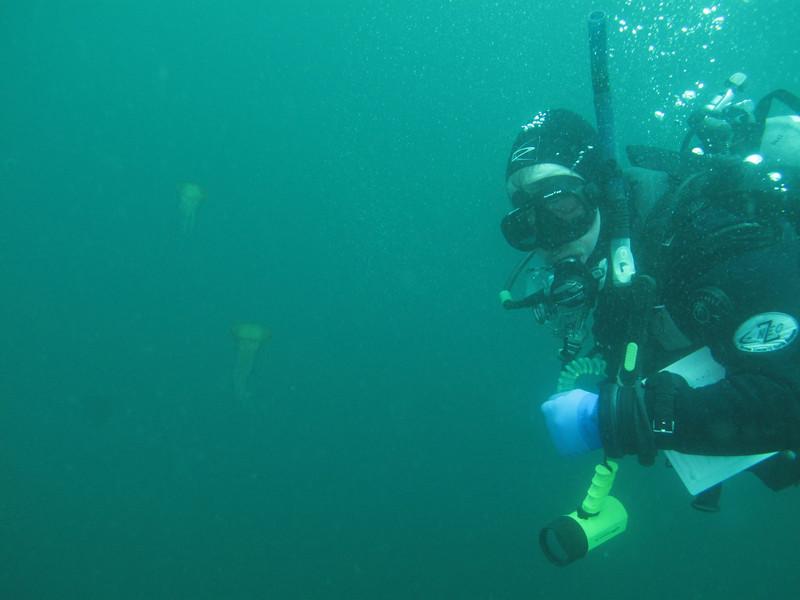 diver w sea nettles<br /> Neah Bay Aug 09