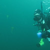 diver w sea nettles<br /> Neah Bay Aug 09