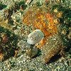 Nanaimo Dorid<br /> Neah Bay Aug 09