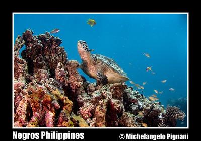Negros Philippines