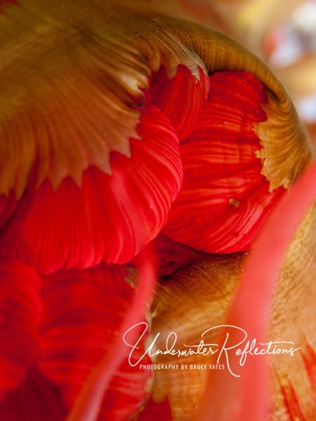 Anemone close-up.