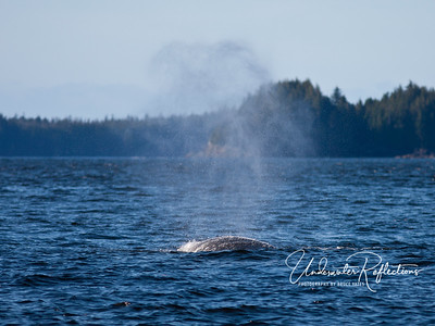 We saw several humpback whales.