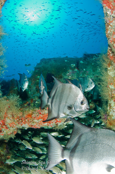 Spadefish at U-352