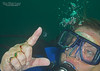 Freshwater Jellyfish: Craspedacusta sowerbyi
