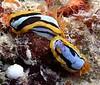 (Rottnest Island, West Australia)