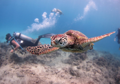 More Turtle Reef Action