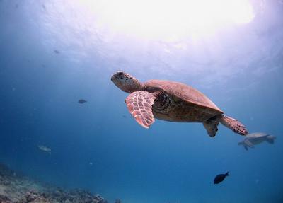 Turtles at Turtle Reef