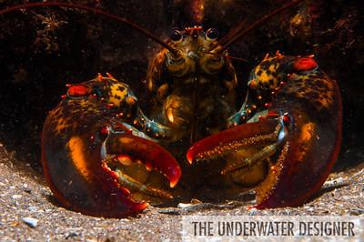 Maine Divers, Portland, Maine