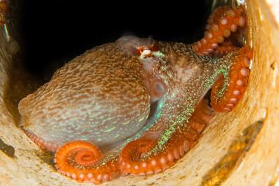 Octopus - Redondo in Des Moines, Washington