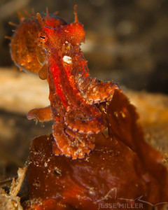 Red Octopus - Redondo in Des Moines, Washington