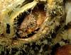 Moss head warbonnet