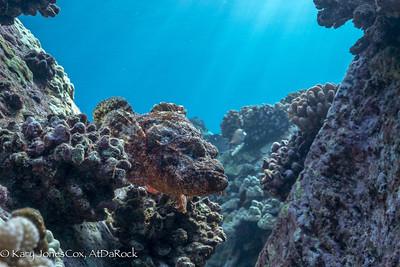 Titan Scorpionfish, a face you can trust