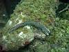 A Bristleworm (aka Fireworm)