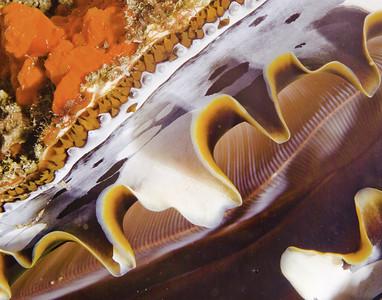 clam11x (1)