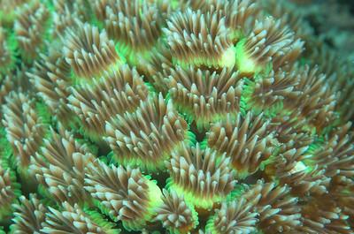 pattern hard coral-6871