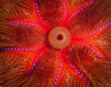 pattern_urchin_2503