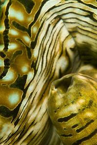 clam-4567
