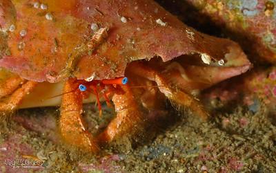 Panama City FL Dives