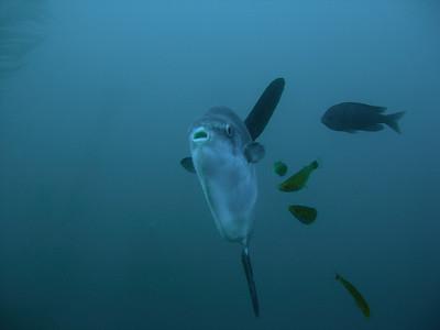 Mola mouth