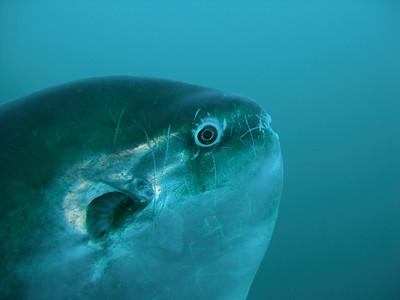 Mola eyeballing