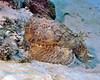 Stonefish 1