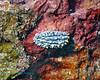 Nudibranch 12