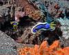 Nudibranch 18