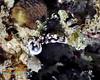 Nudibranch 25