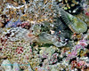 Nudibranch 26